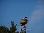 Stork´s Nest in the outskirts of Logroño.