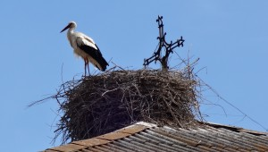 Stork's Nest in Hospital de Órbigo.